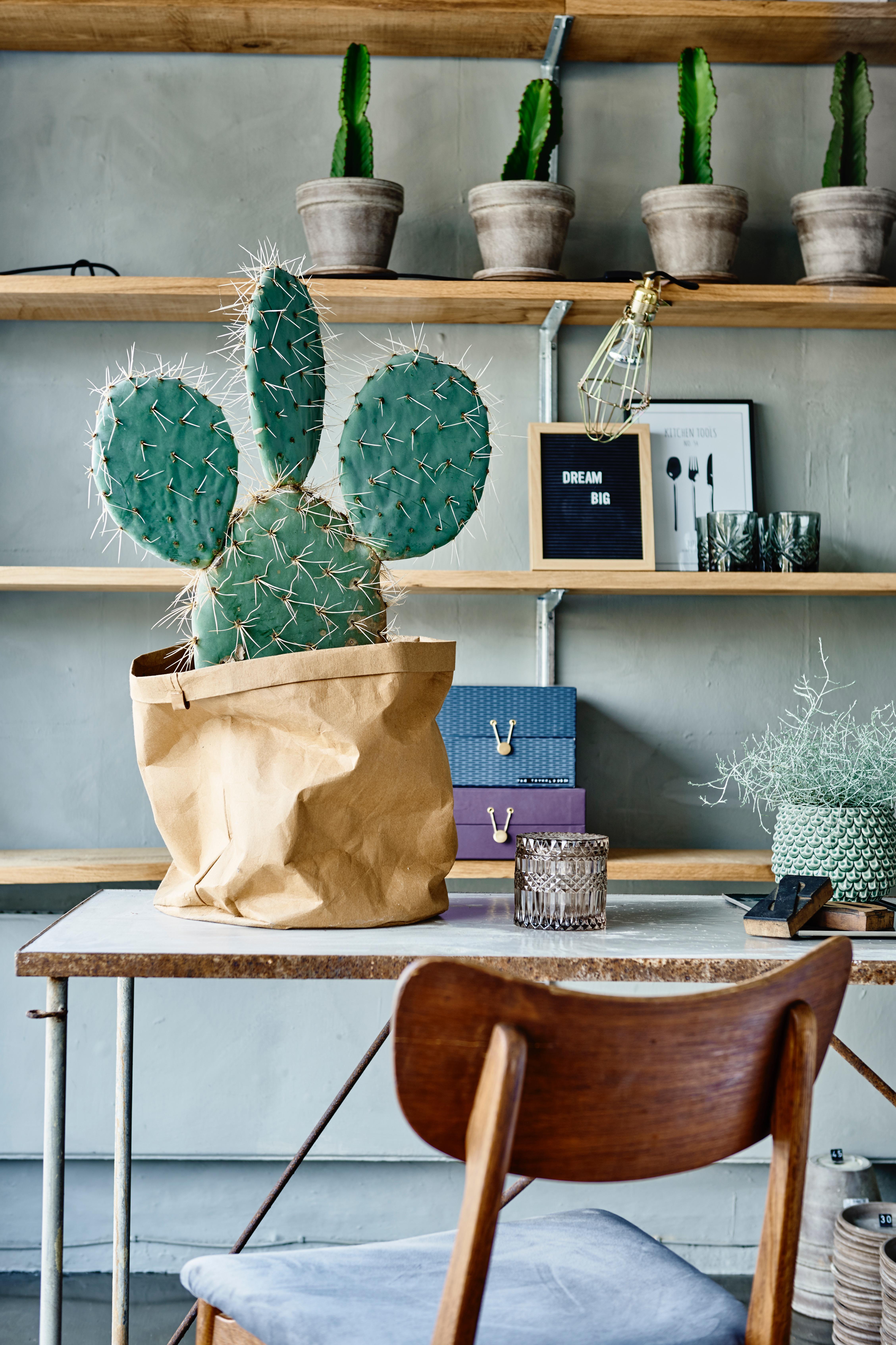 Kaktus i XL
